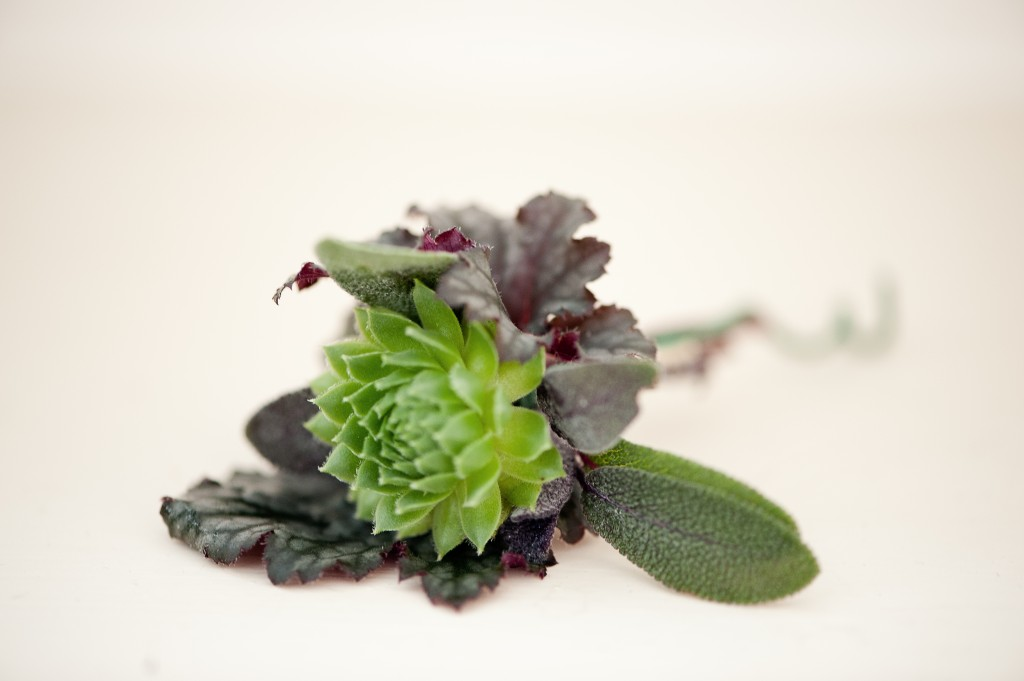 A green succulent with herbs.