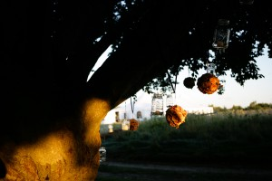 pomanders and candles in mason jars hang off a beautiful old oak tree.