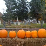 Snapshots of fall…